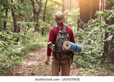 Back view of eldery hipster man wanderlust exploring forest with giant trees in National park on trip carrying backpack, senior male trekking during journey on vacations. Active vacation concept.