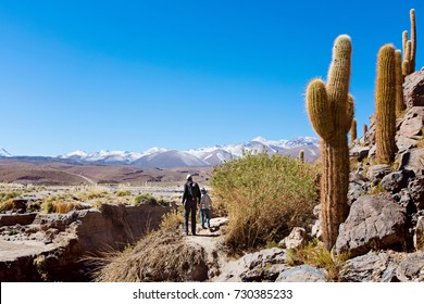 back view of family of two, father and son, hiking and walking together enjoying cactus valley in atacama desert, chile, healthy active family lifestyle and vacation concept