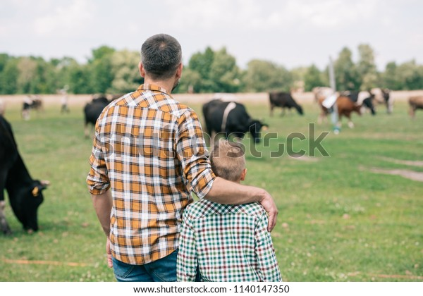 back view of father and son standing together and looking at cows grazing on farm