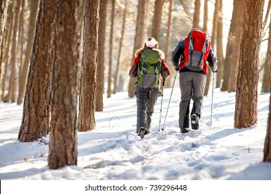 Back view of mountaineers couple in forest