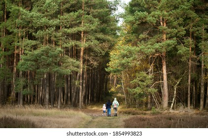 Back view of people in the forest