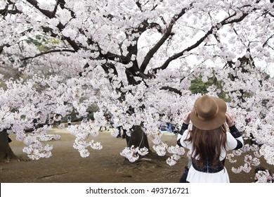 Back view of portrait of woman in hat in cherry bloom