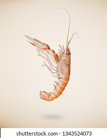 Back view of raw langoustine or scampi isolated on beige background.
