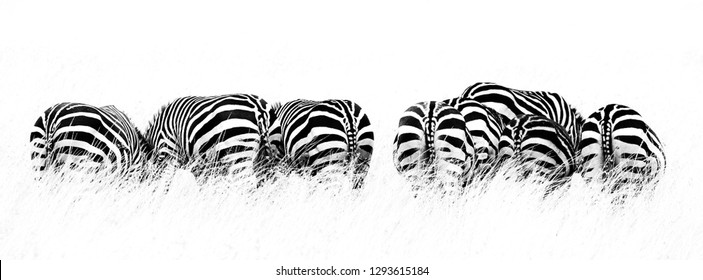 Back view of several Burchells zebra in a row and grazing on the lush grass of the Masai Mara, Kenya. High contract black and white image in horizontal popular social media banner proportions