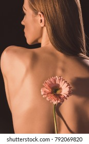 back view of tender naked girl with gerbera flower, isolated on brown