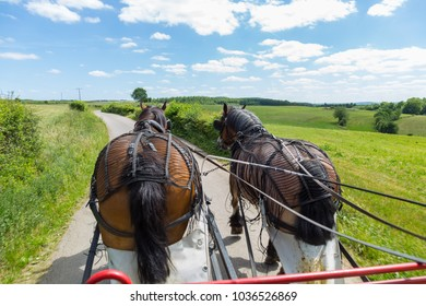 Back view of two Ardennais horses pulling a cart wagon with blue sky in a farm originating from the Ardennes area in Belgium, Luxembourg and France