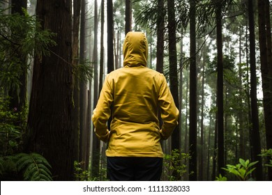Back view of a woman in a beautiful forest