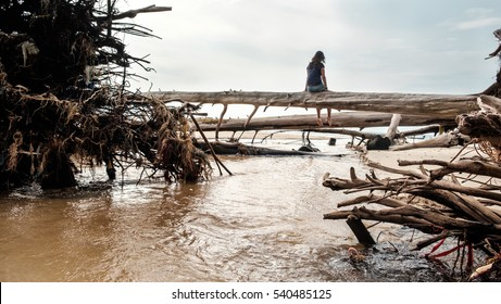 Back view of a woman sitting on the trunk of a fallen tree. Girl sitting alone on the big uprooted tree on the beach.  The river flows over the roots of the dead trees. Deep depression concept