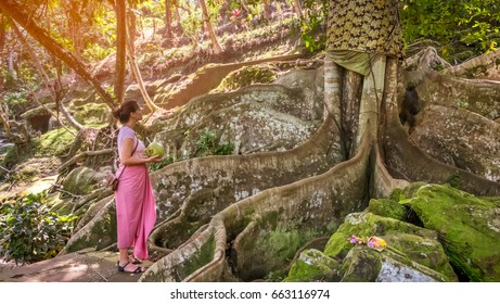 Back view of a woman standing alone against huge sacred tree in Goa Gajah temple, Bali. Bright photo of beautiful female in traditional balinese sarong holding a coconut in her hands and looking up
