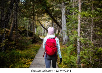 Back view of woman in warm outwear and with red backpack walking on paved wood walkway in green woods of National park of Gaspe