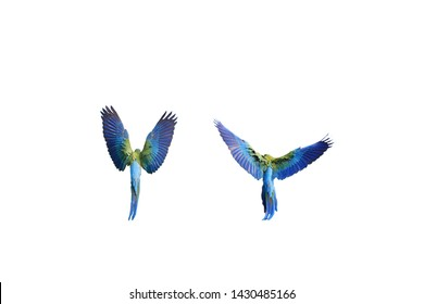 The back wings of a beautiful green macaw parrots.