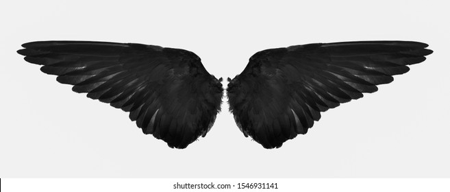 back wings of bird isolated on a white
