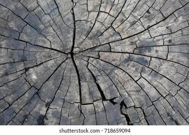 Back Wood Circle Texture.