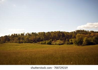 back woods field