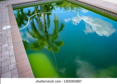 Pool Algae Images Stock Photos Vectors Shutterstock
