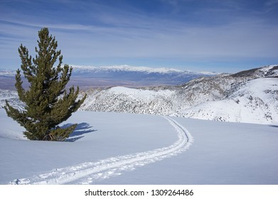 backcountry skiing skin track up onto Table Mountain outside of Bishop California