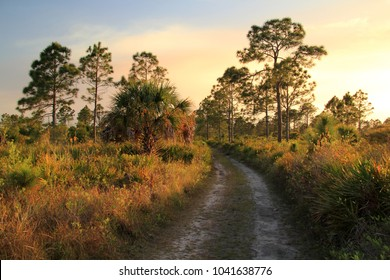 Backcountry Trail in the Bear Island Unit of Big Cypress National Preserve, Florida Everglades