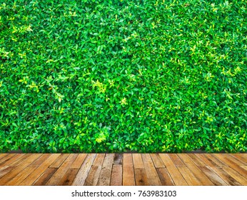 Backdrop of green leaves wall with wood floor.