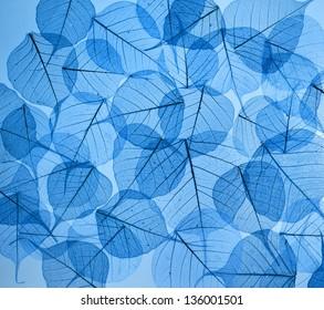 texture en arrière-plan de feuilles florales bleues colorées