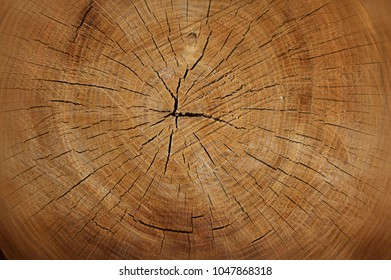 Backdrop of warm textured tree trunk with annual rings and small cracks.