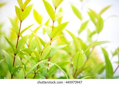 backgounds leaf green
