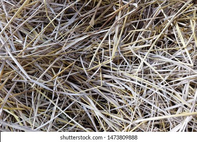 closeup straw of rice texture background. rice straw background.