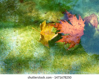 Background about autumn, two maple leaves in clear water and the glare of the sun