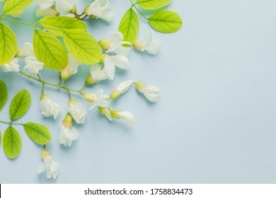 background with acacia flowers. fresh flowers and leaves. minimal