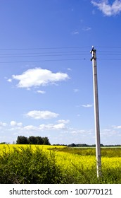 background of agricultural rapeseed fields and concrete electricity pole on background of blue sky.