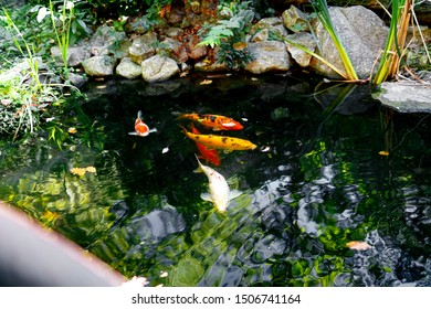 In the background, among the reflections of the water, koi carps