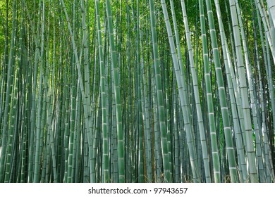 background of  arashiyama bamboo forest, Kyoto, Japan