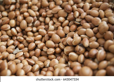 Background of argan seeds produced by Argania spinosa tree, popular for its oils, used in cosmetic manufacturing, body and hair treatments, in Marrakesh, Morocco