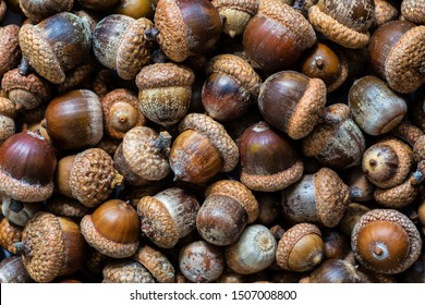 Background with autumn acorns and leaves closeup. Acorns macro. Oak acorns.Brown autumn acorns on the table. Autumn backdrop. Top view from above.
