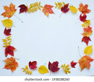 background with autumn flowers on a white chalkboard