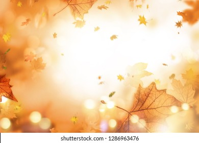 Background autumn leaf landscape in autumn with maple leaves and sunlight and bokeh feeling golden sun