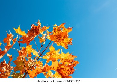 Background autumn  leaves.