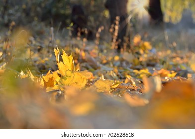 Background with autumn leaves lying in sunny weather