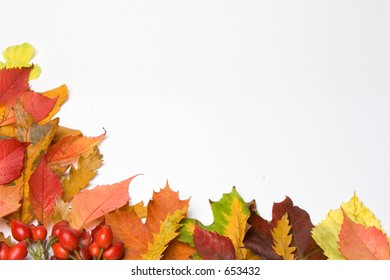 Background of Autumn leaves & rosehips ,room for copy