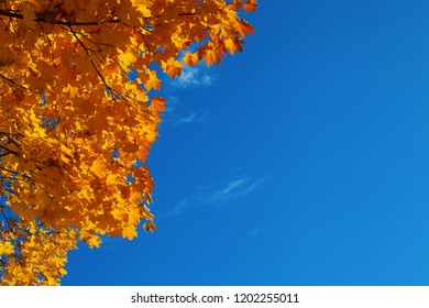 Background from autumn maple leaves and the blue transparent sky