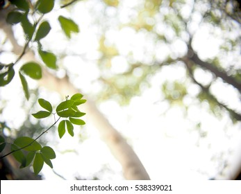 background backdrop picture photo of tropical plant trees with green leaves and brown branches in jungle taken from bottom view with light blue sky selective focus very shallow depth of field