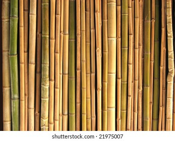 Background of a lot of bamboo reeds