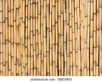 Background with a lot of bamboo reeds