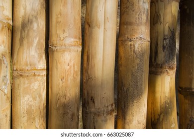 Background of bamboo in the sun