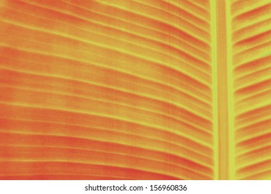Background from banana green leaves