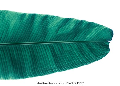 Background of banana leaf in the summer in the tropical. Copy space for your text.