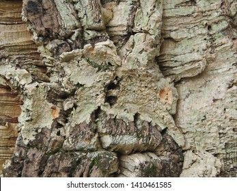 Background with bark balsa wood cork tree texture