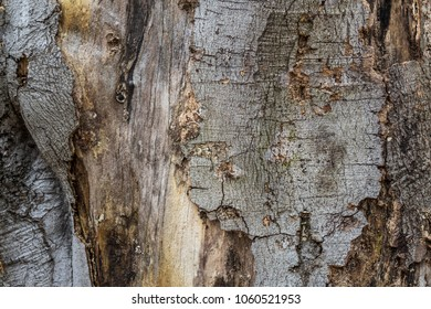 background of a bark. close up photo