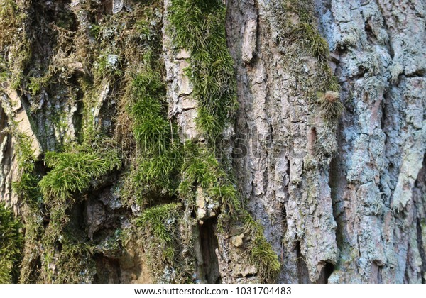 Background with bark and moss