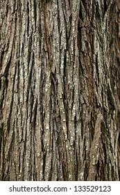 background of bark tree