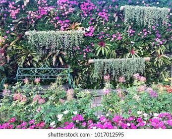 Background: Beautiful Flowers in the Garden